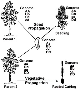 Asexual propagation types of trees